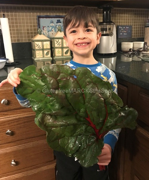 Sammy holding a large Swiss Chard Leaf