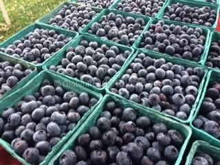 fresh picked gluten-free blueberries