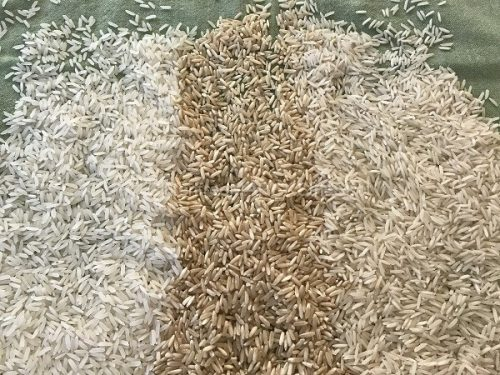 gluten-free rice for the gluten-free pantry